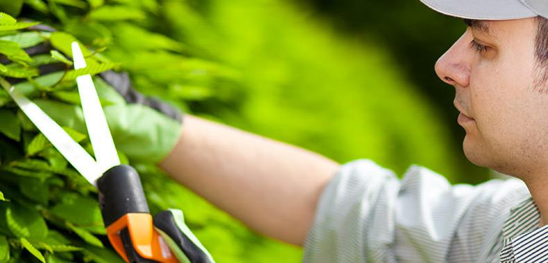 Gartenarbeiten- Aktiv Dienstleistungen NU